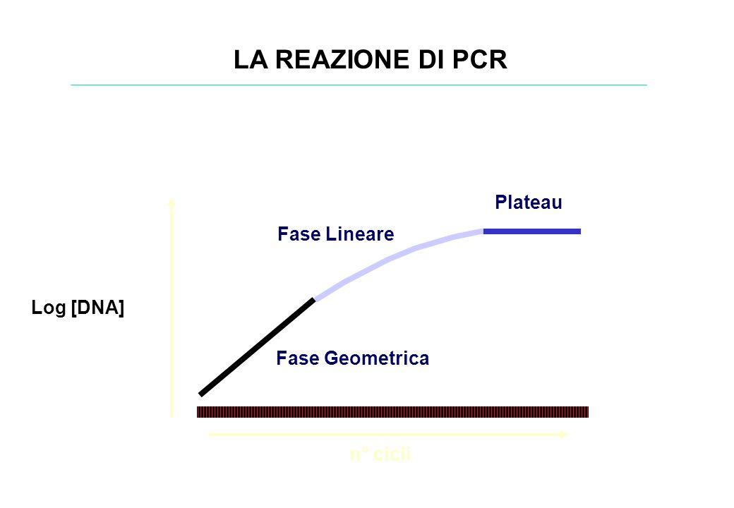 LA REAZIONE DI PCR Plateau Fase Lineare Log [DNA] Fase Geometrica